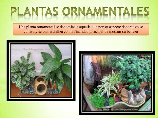 Plantas ornamentales y xerofilas for Plantas medicinales y ornamentales