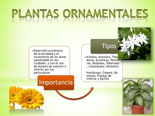 Plantas ornamentales y xerofilas for Caracteristicas de las plantas ornamentales