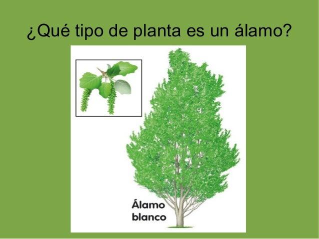 Plantas rboles hoja caduca y perenne for Arboles de hoja perenne limpios