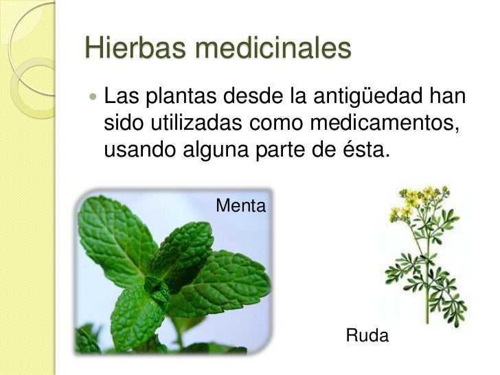 Plantas medicinales y sus usos  Imagui