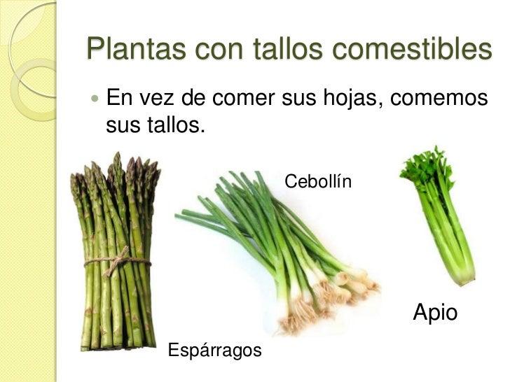 de cada planta? Buena parte de nuestra alimentación incluye plantas