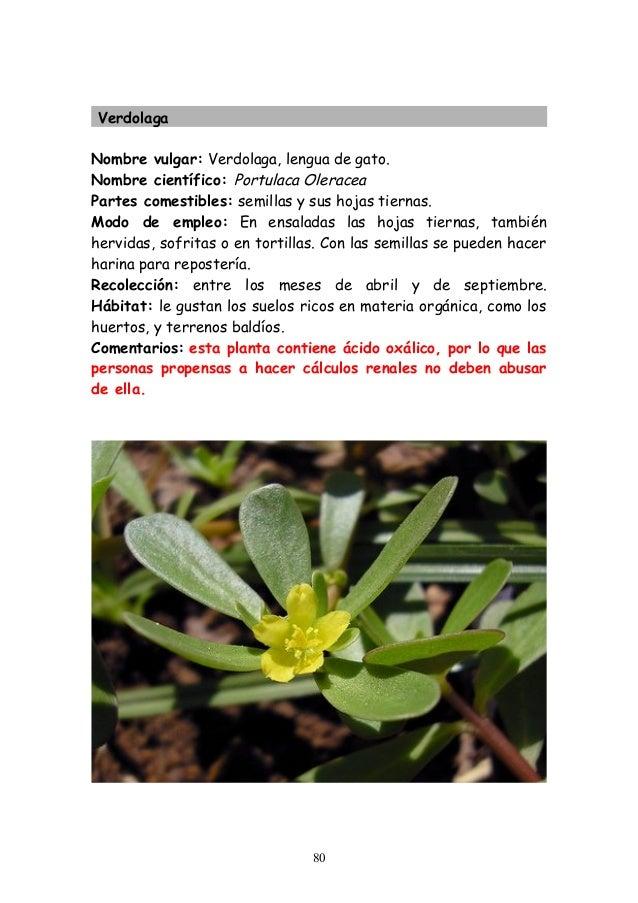 Plantas silvestres comestibles for Plantas de interior lengua de gato