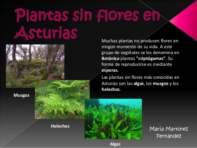 Plantas sin flores en asturias maria martinez for Cuales son las plantas ornamentales y sus nombres