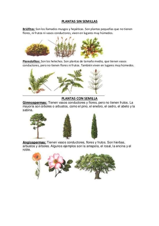 Plantas sin semillas y con semilla