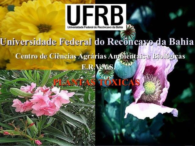 Universidade Federal do Recôncavo da Bahia Centro de Ciências Agrárias Ambientais e Biológicas E.R.V.A.S.  PLANTAS TÓXICAS
