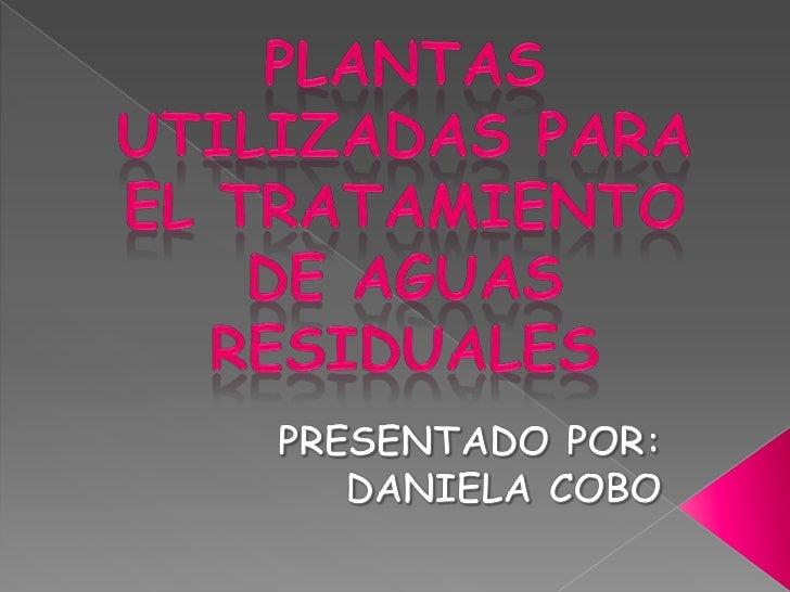 PLANTAS UTILIZADAS PARA EL TRATAMIENTO DE AGUAS RESIDUALES PRESENTADO