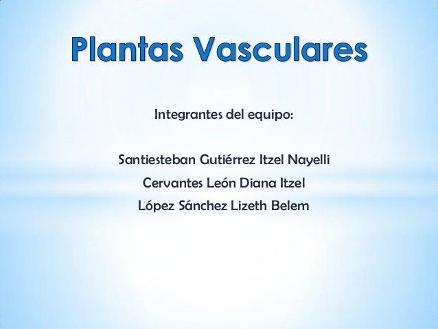 Plantas vasculares