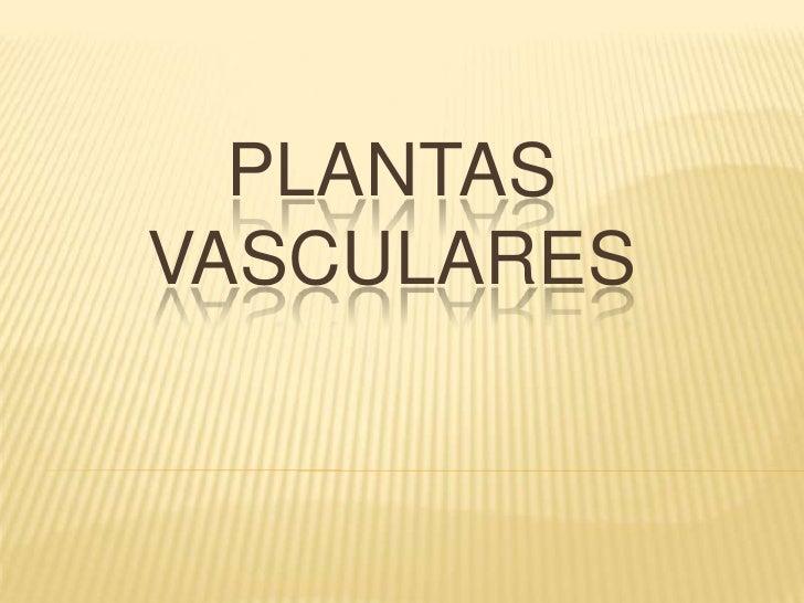 PLANTAS  VASCULARES<br />