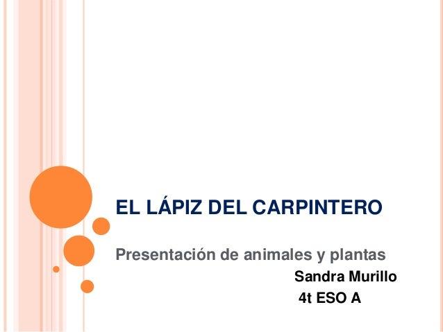 EL LÁPIZ DEL CARPINTERO Presentación de animales y plantas Sandra Murillo 4t ESO A