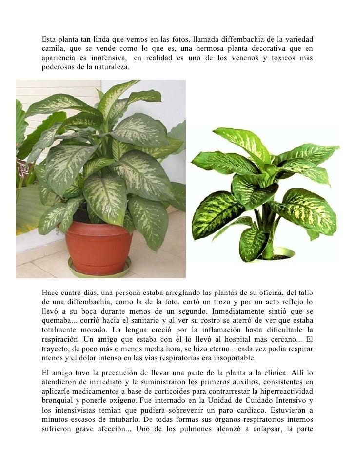 Tipos de Plantas Venenosas Planta Venenosa