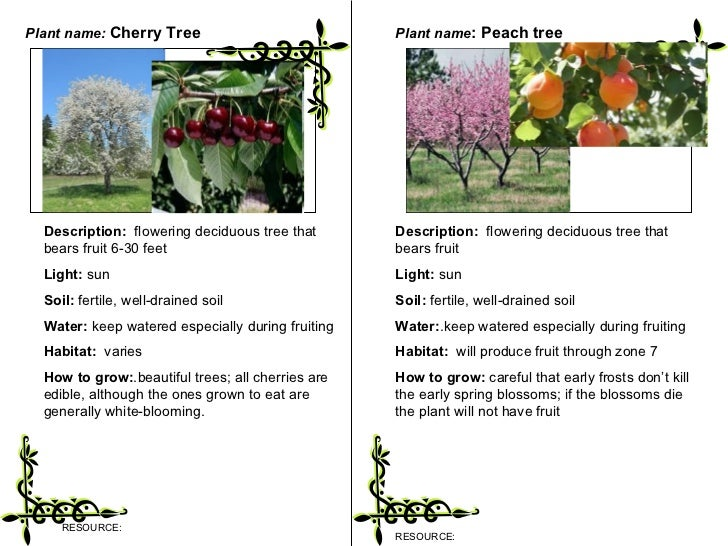 Description of trees and plant essay
