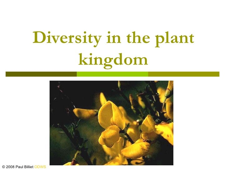 Diversity in the plant                     kingdom© 2008 Paul Billiet ODWS