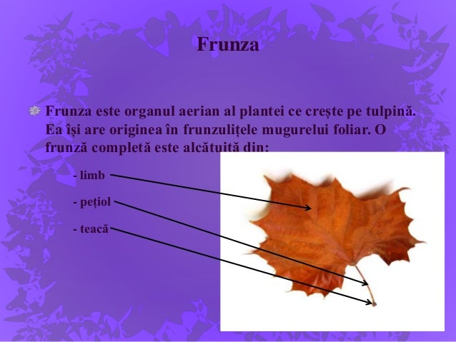 Plantele Medicinale Cb Alcatuirea Plante Fruct
