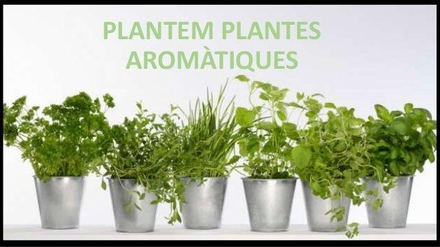 PLANTEM PLANTES AROMÀTIQUES