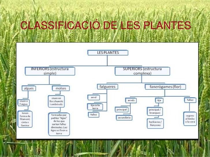 CLASSIFICACIÓ DE LES PLANTES<br />