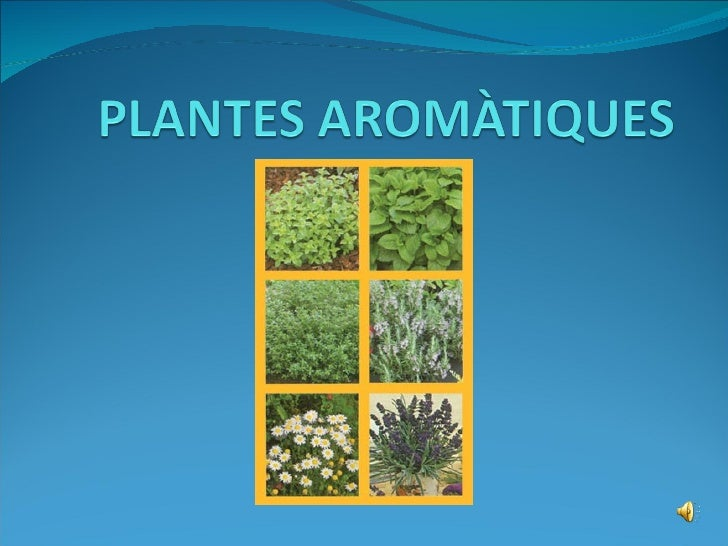 plantes arom tiques 1234033208014972 1