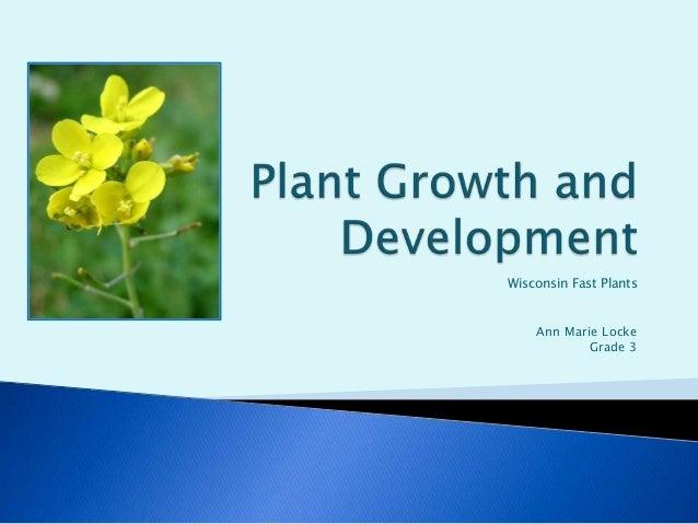 Wisconsin Fast Plants    Ann Marie Locke            Grade 3