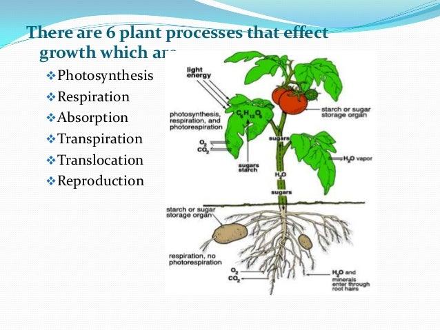 Plant growth &deve...