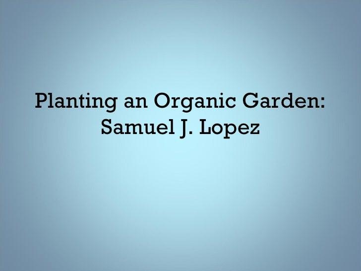 Planting An Organic Garden2
