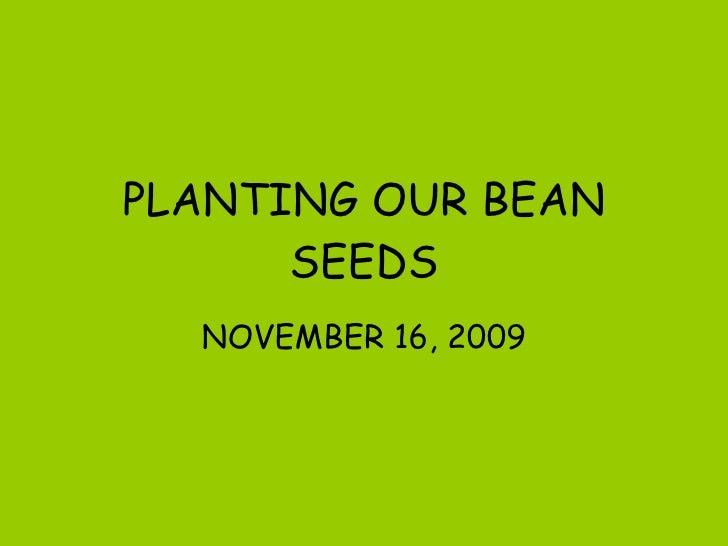 PLANTING OUR BEAN SEEDS NOVEMBER 16, 2009