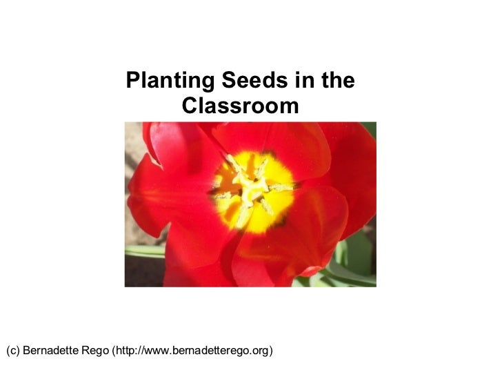 Planting seeds in the classroom