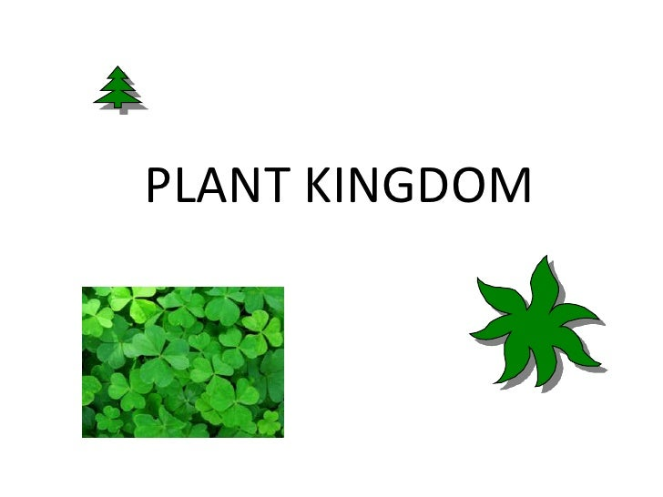 PLANT KINGDOM<br />