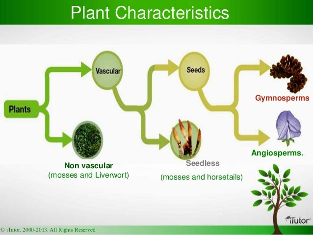 Flowering Plant Families of the World V Heywood R