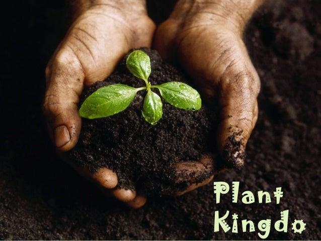 Plant Kingdo