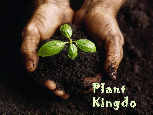 PlantKingdo