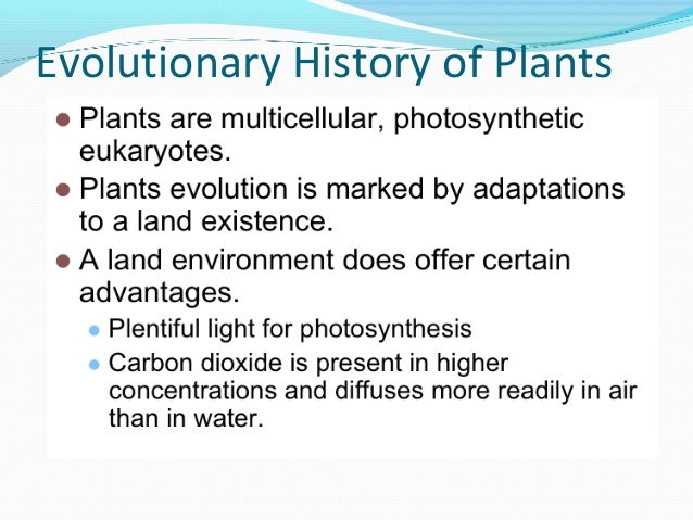 Plant lecture 7
