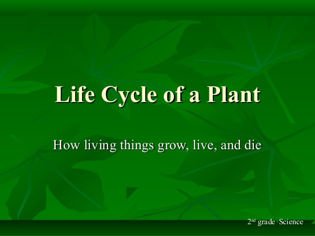 Life Cycle of a PlantLife Cycle of a Plant How living things grow, live, and dieHow living things grow, live, and die 2nd ...