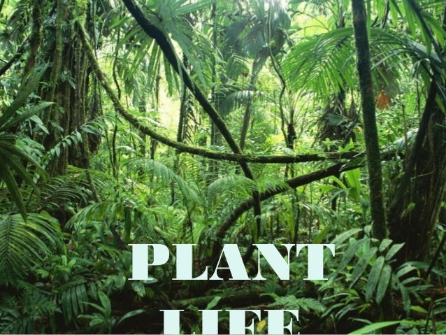Plant life unit 5 2nd year