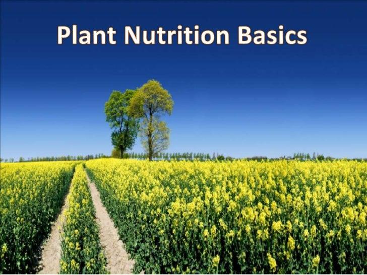 Plant Nutrition Basics