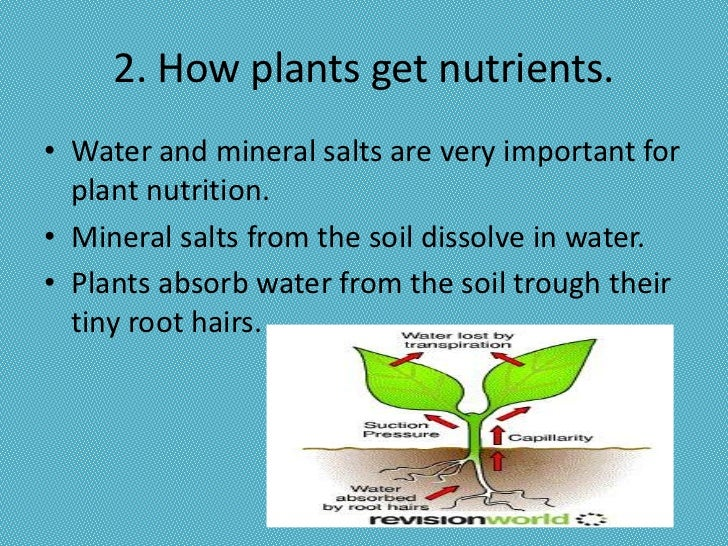 Plant nutrition for Importance of soil minerals