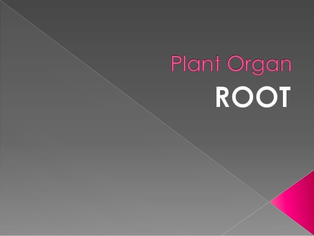Roots are the principal water-absorbing organs of a plant.  Roots can also be aerial or aerating (growing up above the gr...