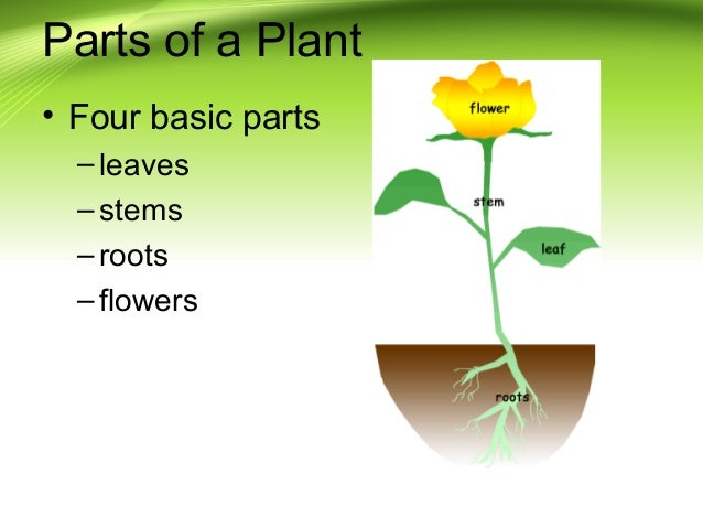 Plant parts for Four main components of soil