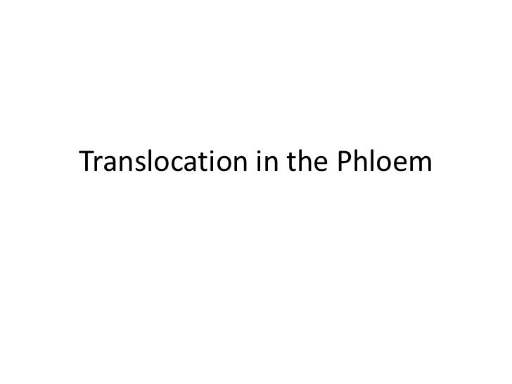 Plant physio translocation in the phloem