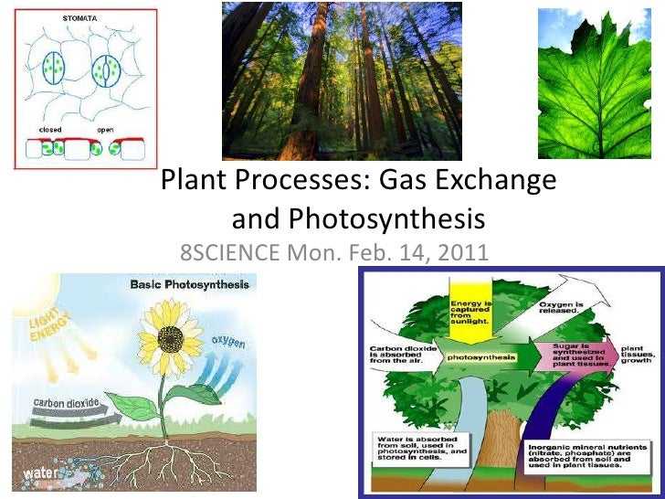 Plant Processes: Gas Exchange and Photosynthesis<br />8SCIENCE Mon. Feb. 14, 2011<br />