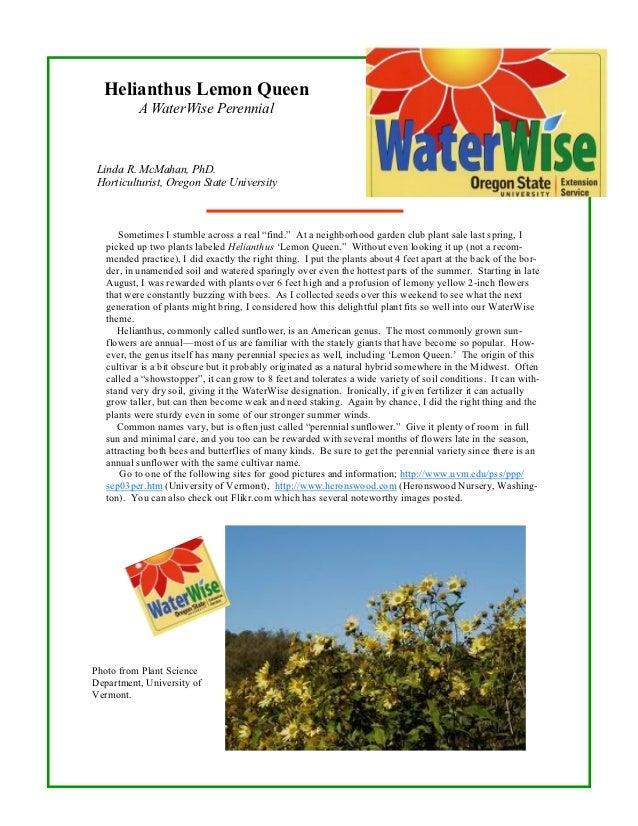 Helianthus Lemon Queen: A Waterwise Perennial - Oregon