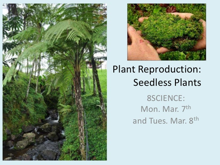 Plant Reproduction: Seedless Plants<br />8SCIENCE: Mon. Mar. 7thand Tues. Mar. 8th<br />