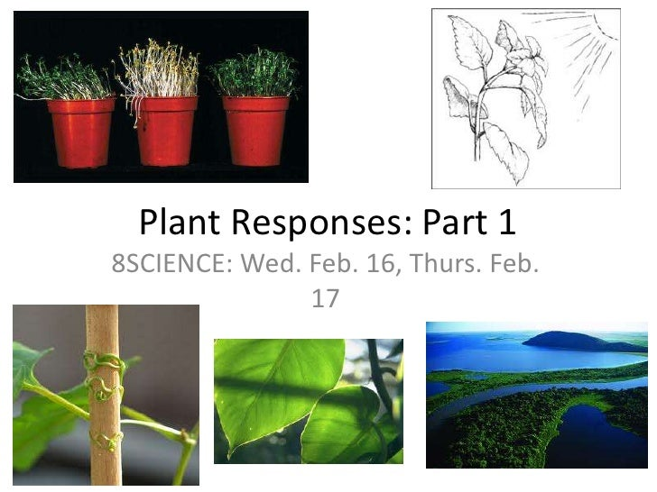 Plant Responses: Part 1<br />8SCIENCE: Wed. Feb. 16, Thurs. Feb. 17<br />