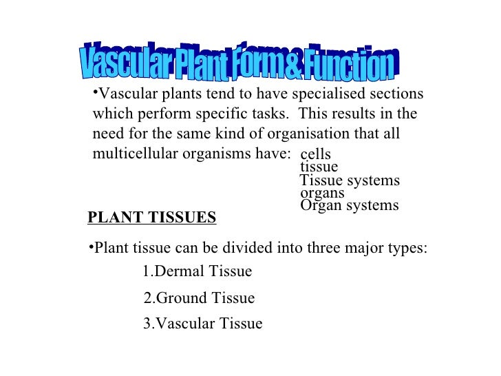 PLANT TISSUES <ul><li>Plant tissue can be divided into three major types: </li></ul><ul><li>Vascular plants tend to have s...