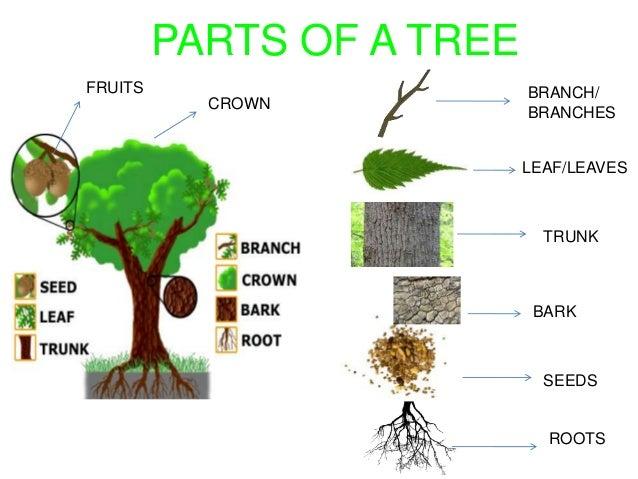 Plants 35393898 on Leaf Worksheets For Preschoolers