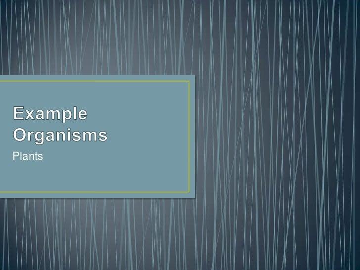 Plants organisms[1]