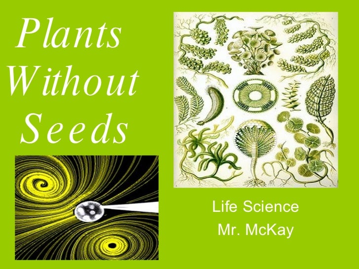 Plants  Without  Seeds Life Science Mr. McKay