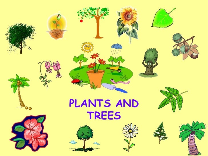 Plants and trees for Different types of plants and trees