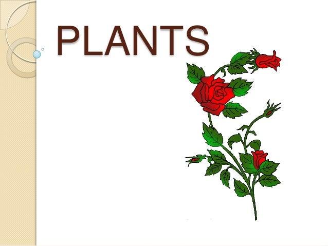 Plants 1 epo