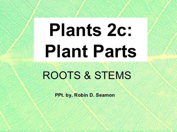 Plants 2c: Plant Parts PPt. by, Robin D. Seamon ROOTS & STEMS
