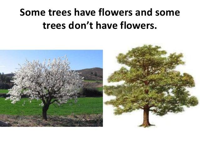 we Eat Trees Transcript of Plants we Eat