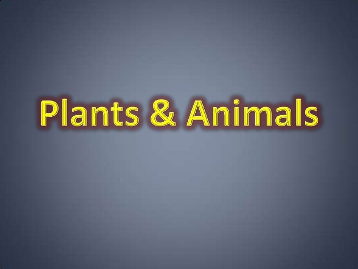 Plants & animals